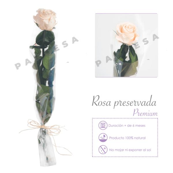 Flor del Recuerdo preservada. Rosa blanca | TIENDA PARCESA